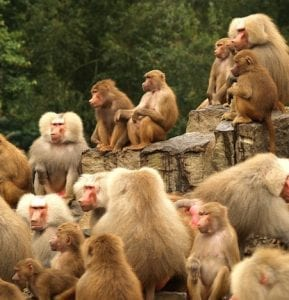 Animales sociales